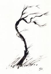Poemes Japonesos A La Mort